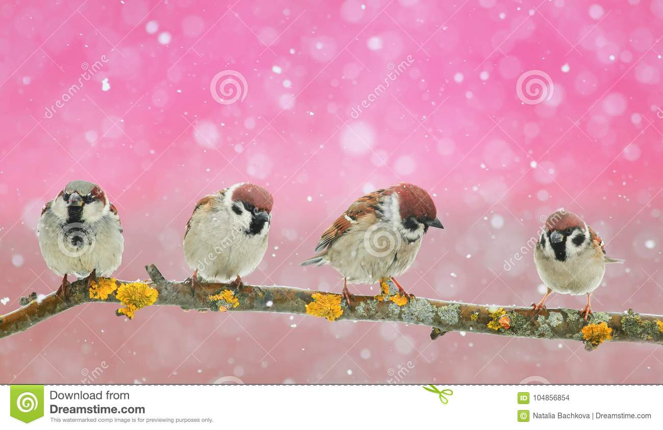 lot of funny little birds sitting in a beautiful Christmas Par