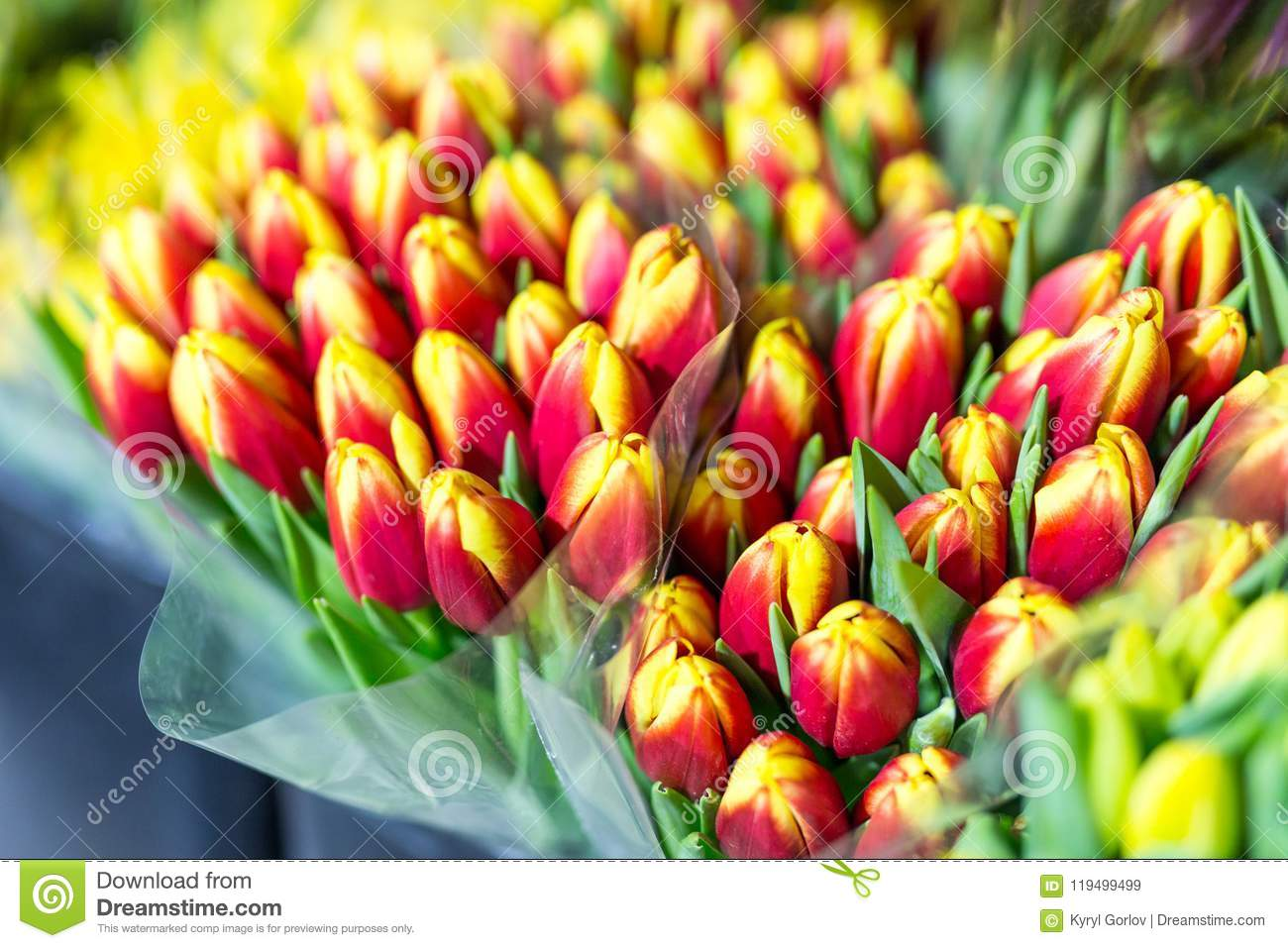 Lot Of Multicolored Tulips Bouquets  Flower Market Or Store