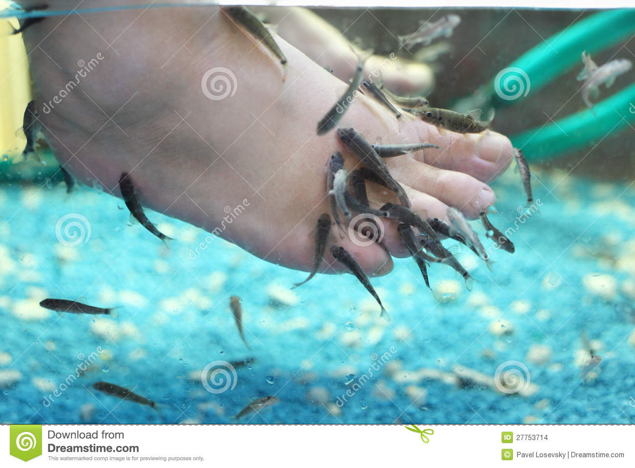 Lot of small fish eat old skin on children feet stock for Dreaming of eating fish
