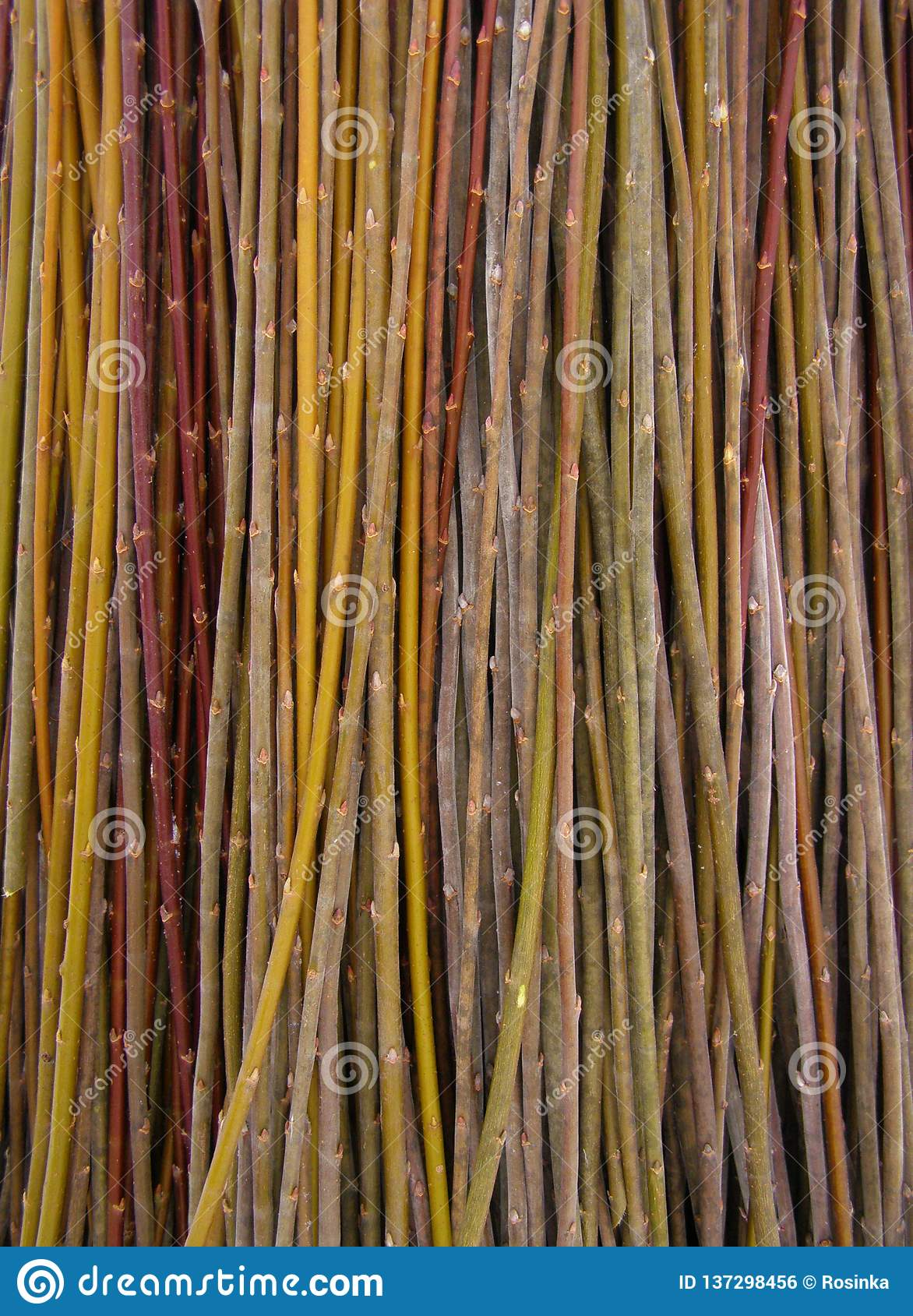 A Lot Of Willow Twigs Raw Material For Basket Weaving Stock Photo Image Of Natural Craft 137298456