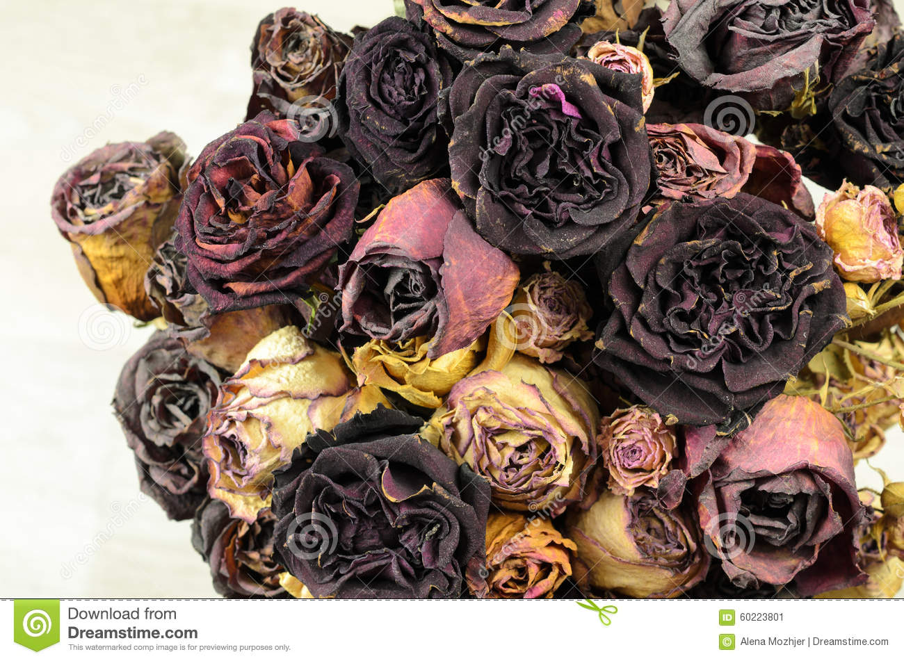 A lot of wilted rose stock image image of depression 60223801 bouquet of dried flowers a lot of wilted rose izmirmasajfo