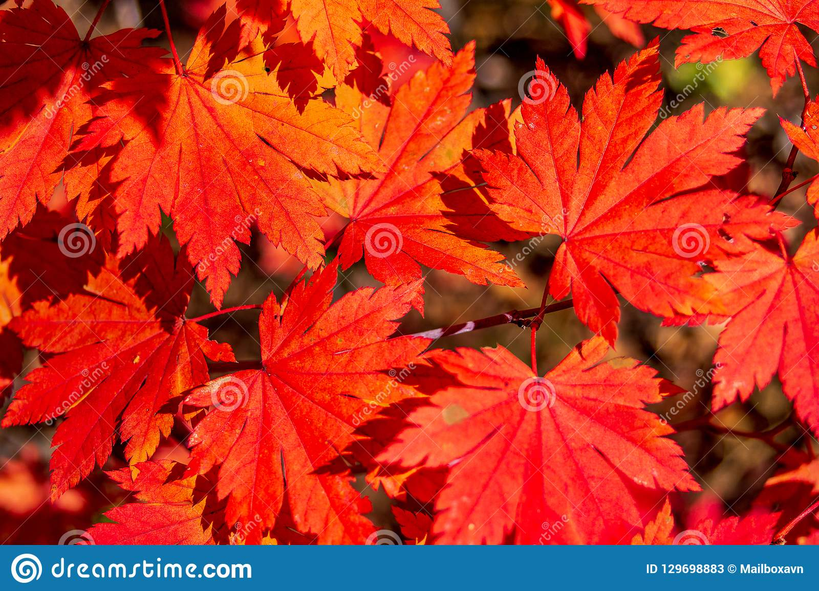 of yellow and red autumn leaves