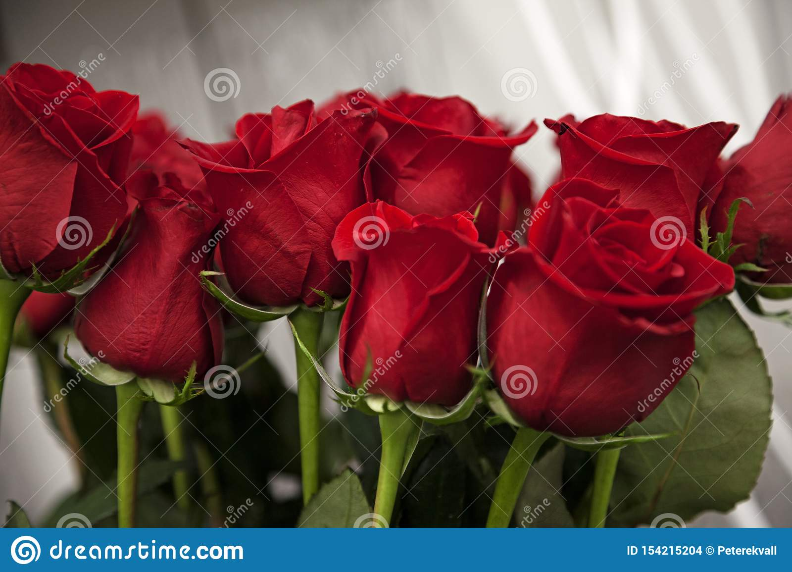Lotes de rosas vermelhas para o dia de Valentim