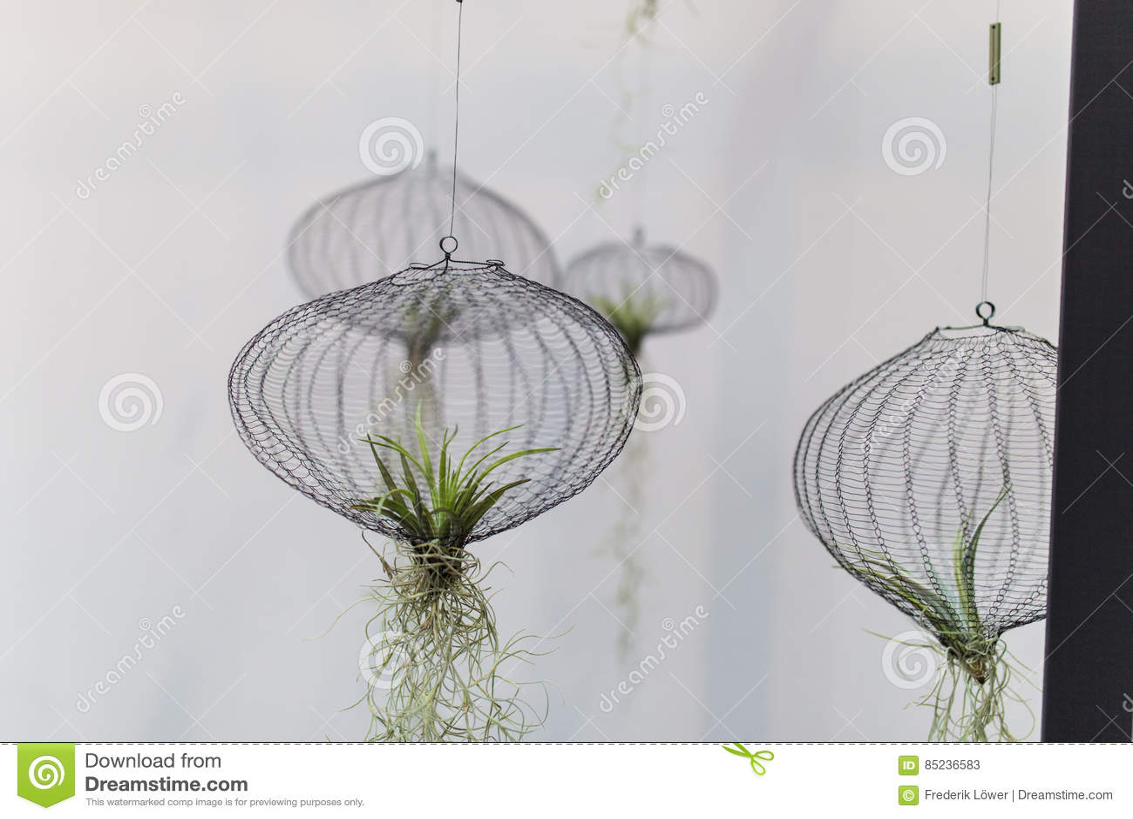 Lotnicze rośliny w sieci