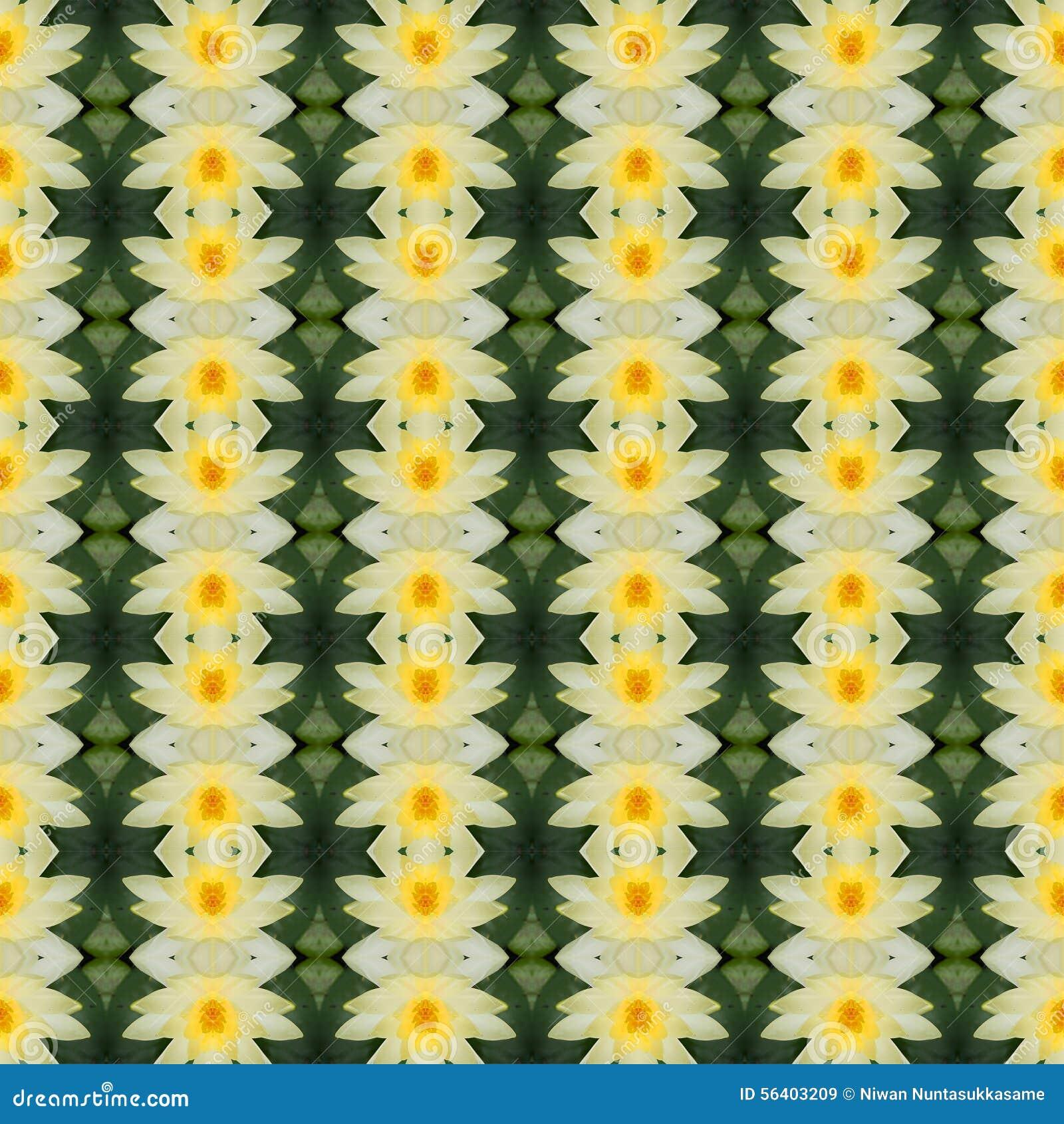 Loto amarillo hermoso en la plena floración inconsútil