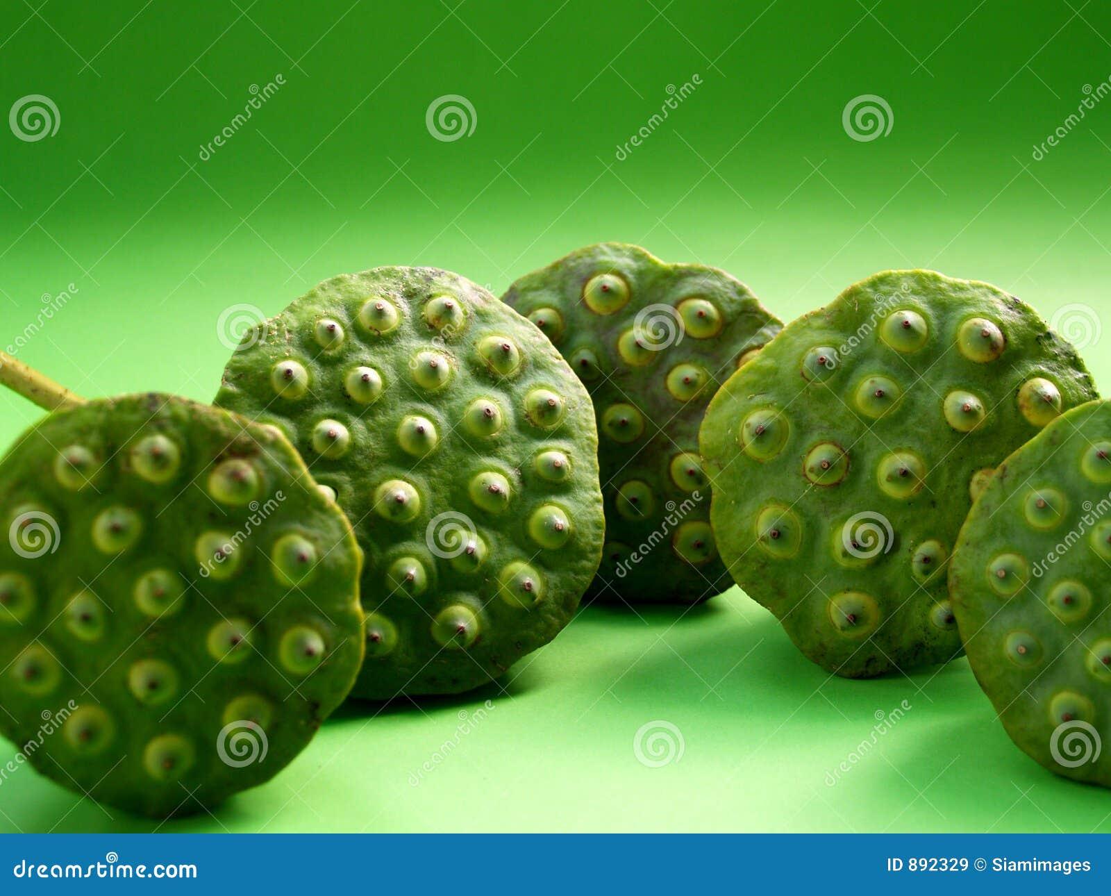 Lotos owocowy