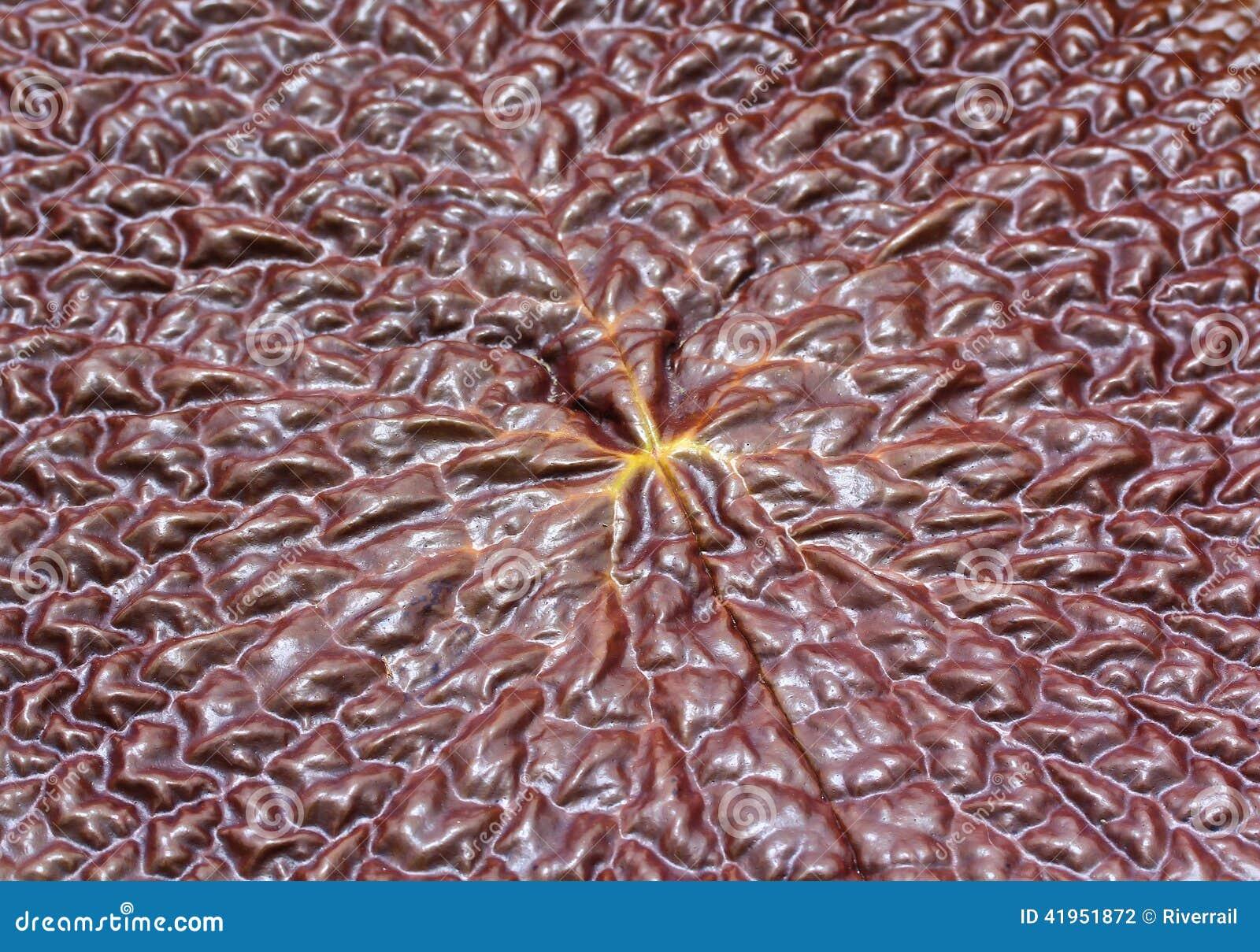 Lotosowy liść