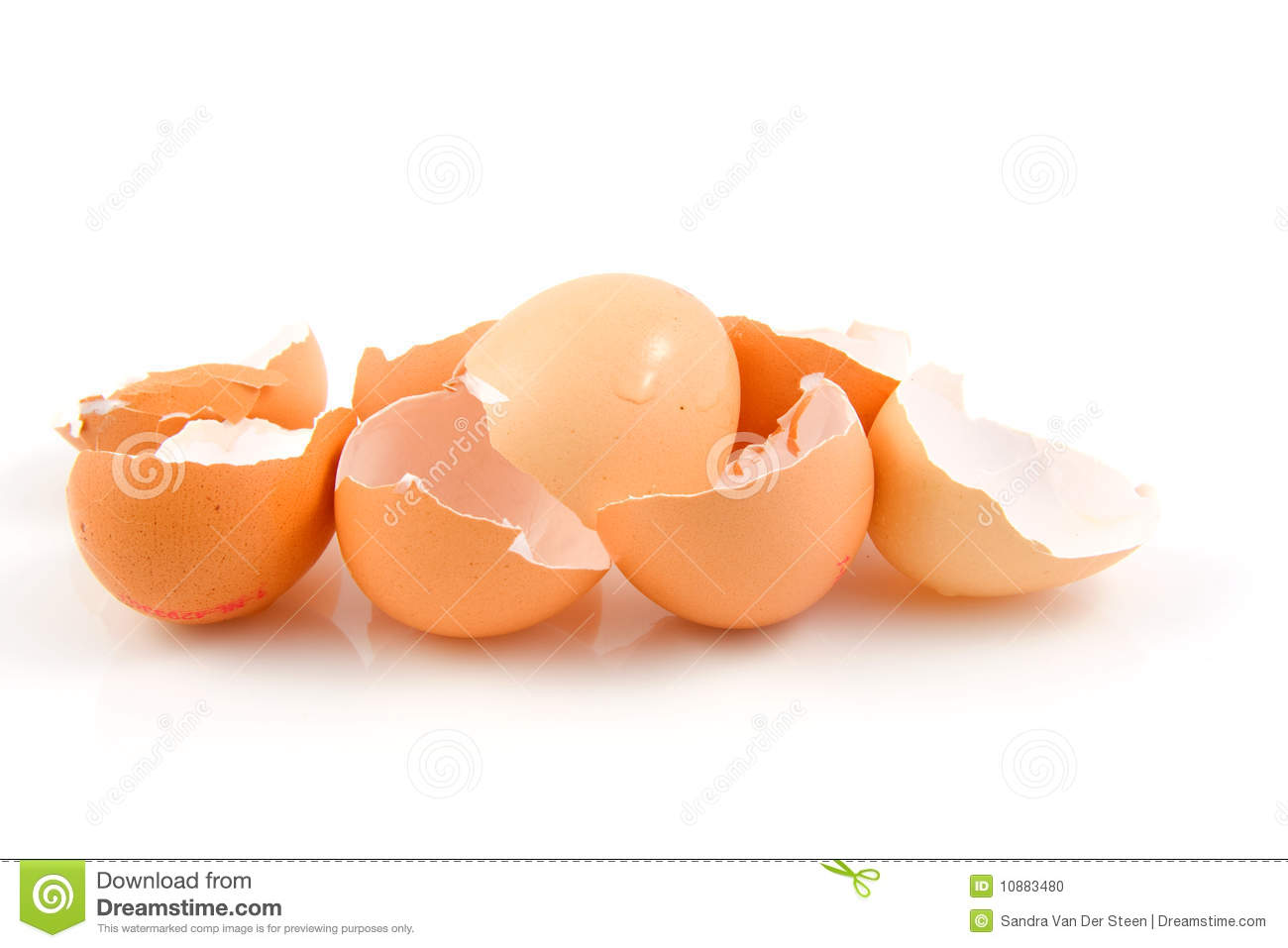 Lots of broken egg shells