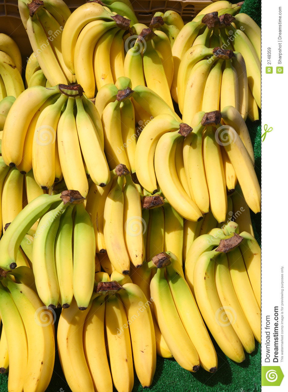 Lots Of Bunches Of Bananas Royalty Free Stock Images