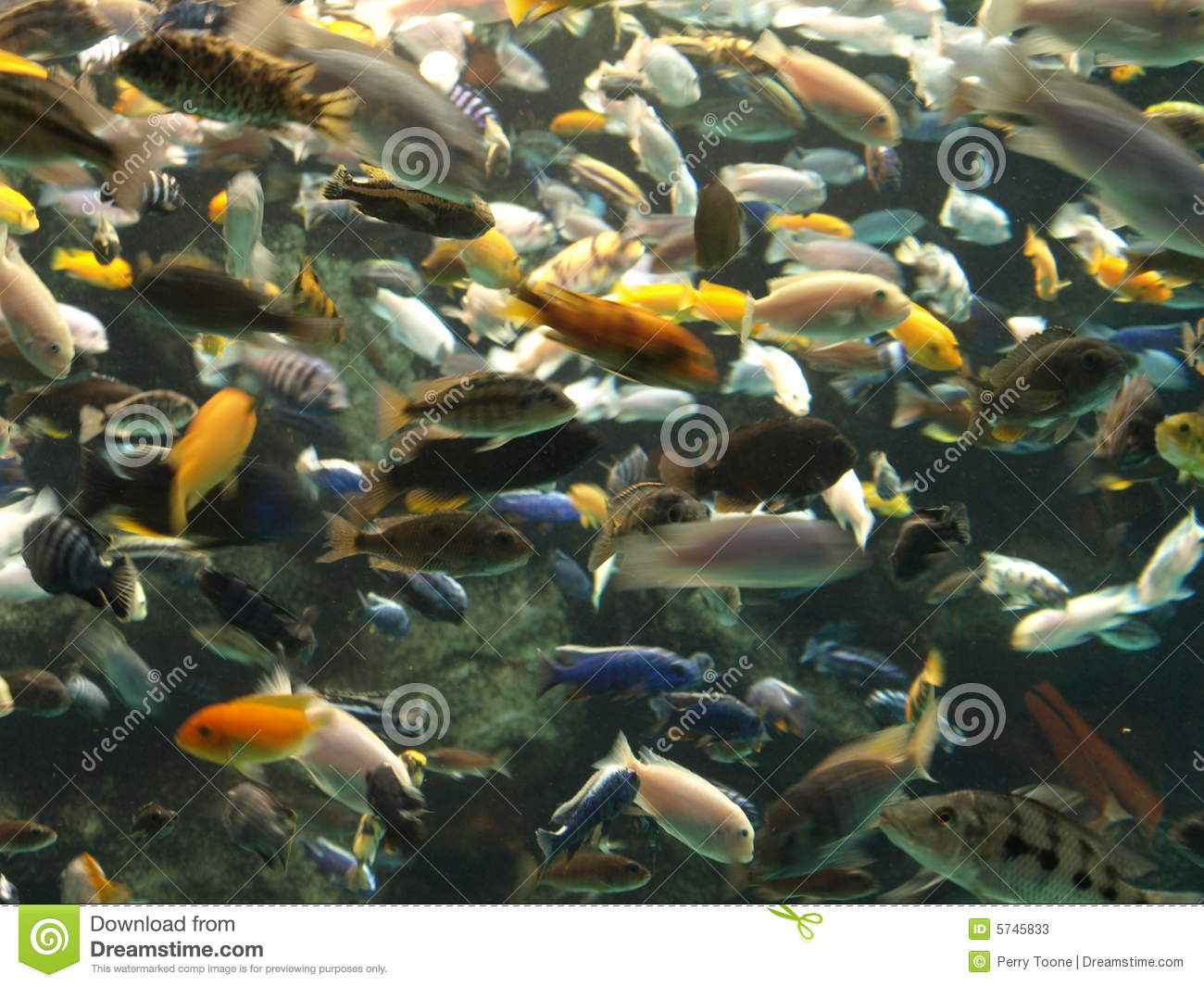 Lots of fish stock photos image 5745833 for Lot of fish