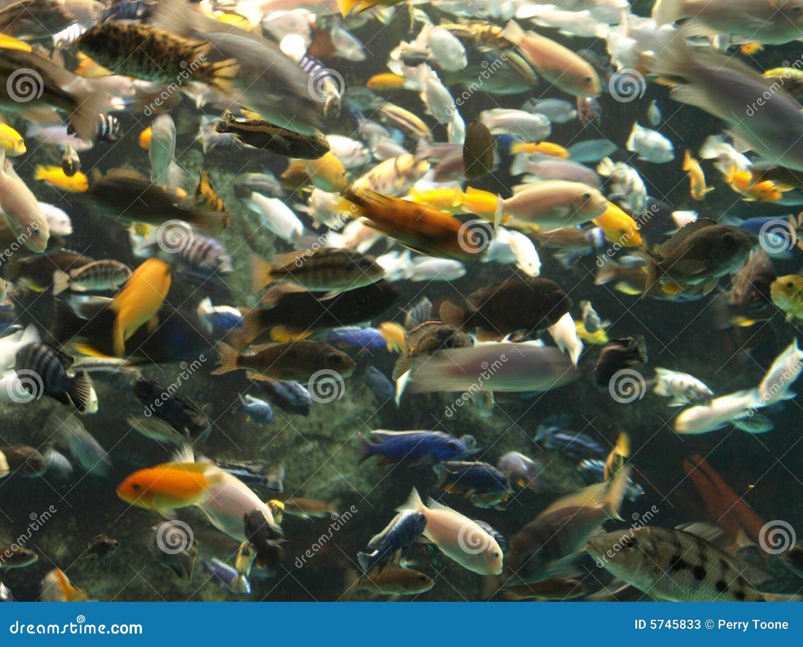 Lots Of Fish Stock Photos Image 5745833