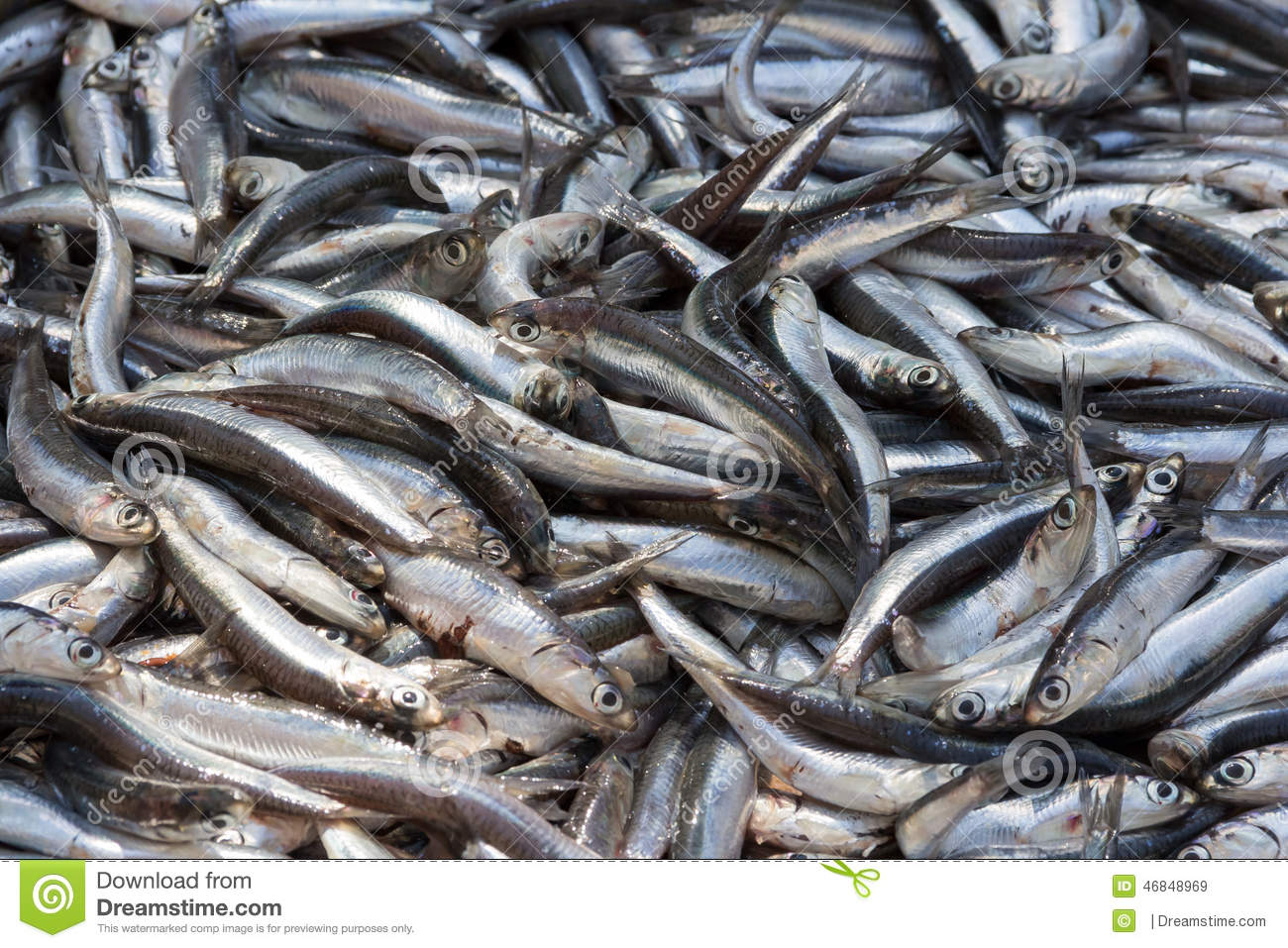 Lots Of Fish Stock Image Image Of Nutrition Saltwater