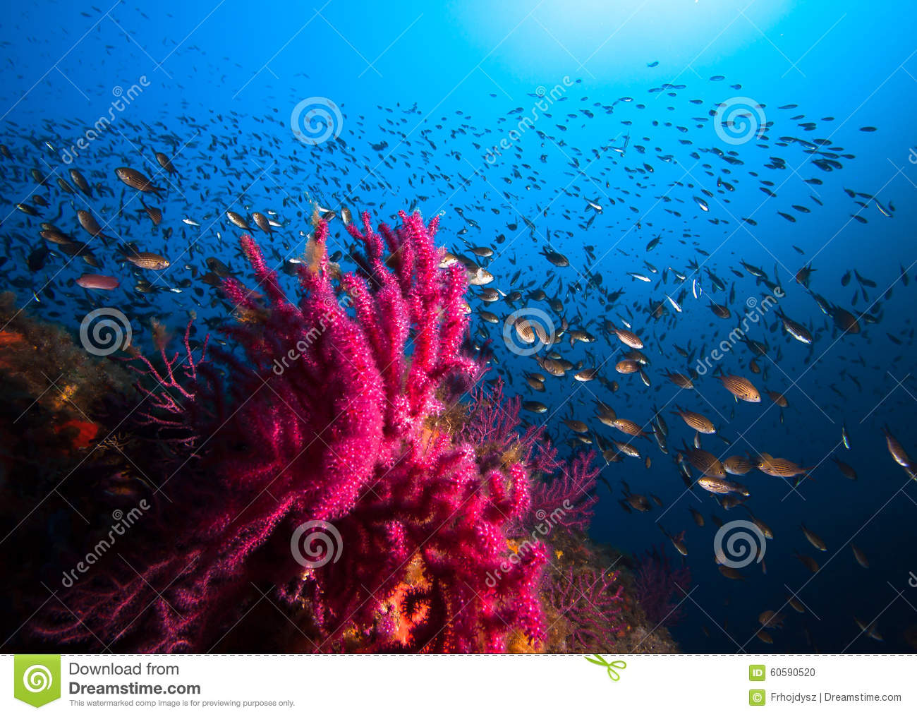 Lots of fish in a mediterranean reef stock photo image for Lots of fish