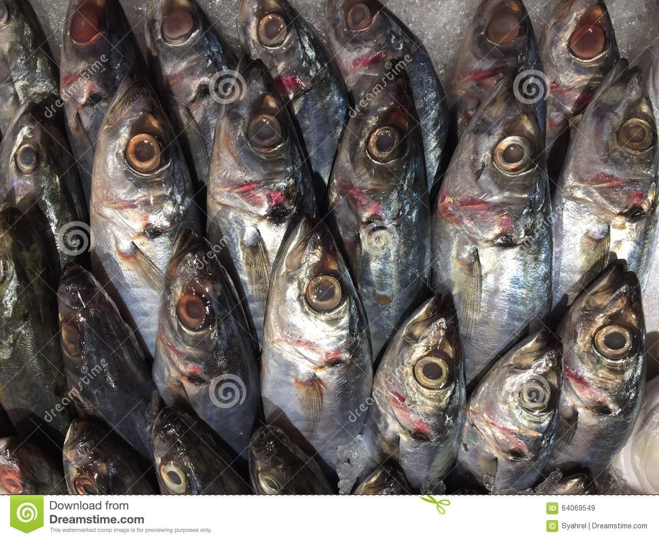 Lots of fish stock photo image 64069549 for Lots of fish