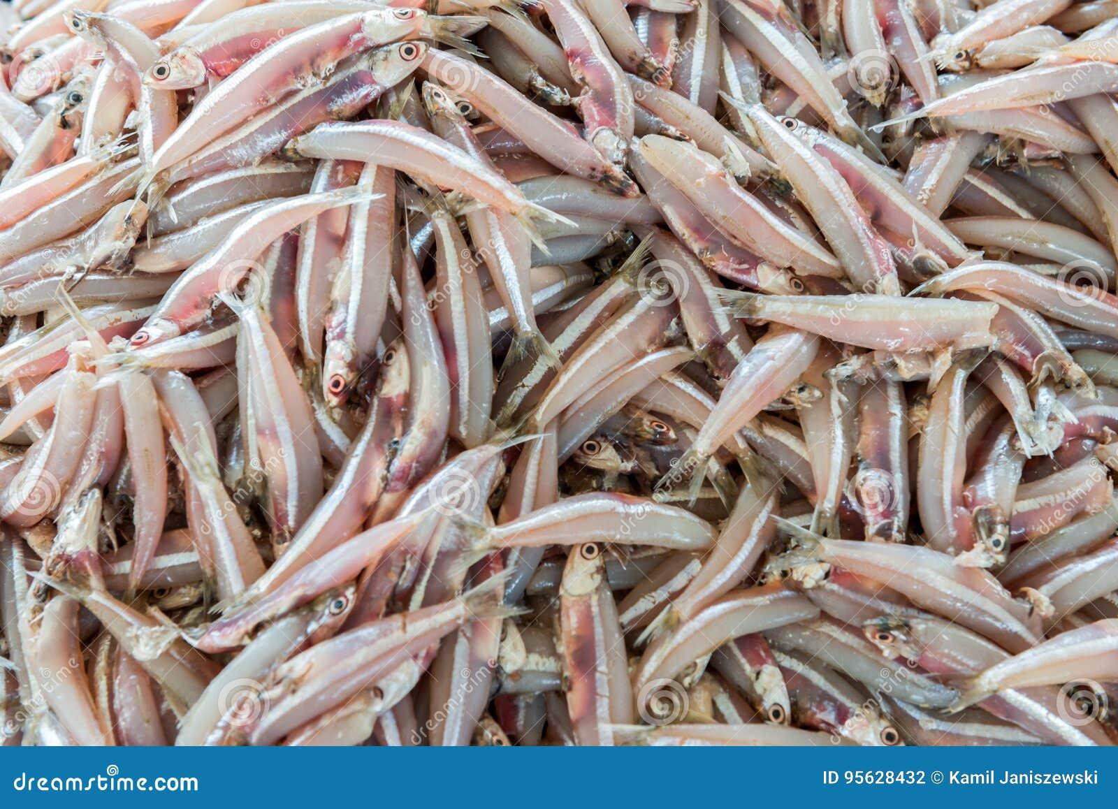 lots of fish