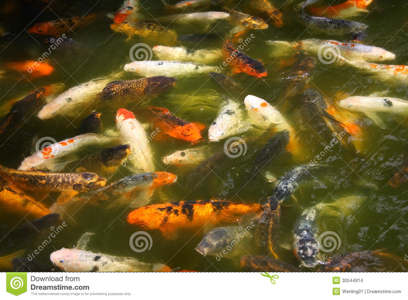 Lots Of Fish Stock Images Image 30544914