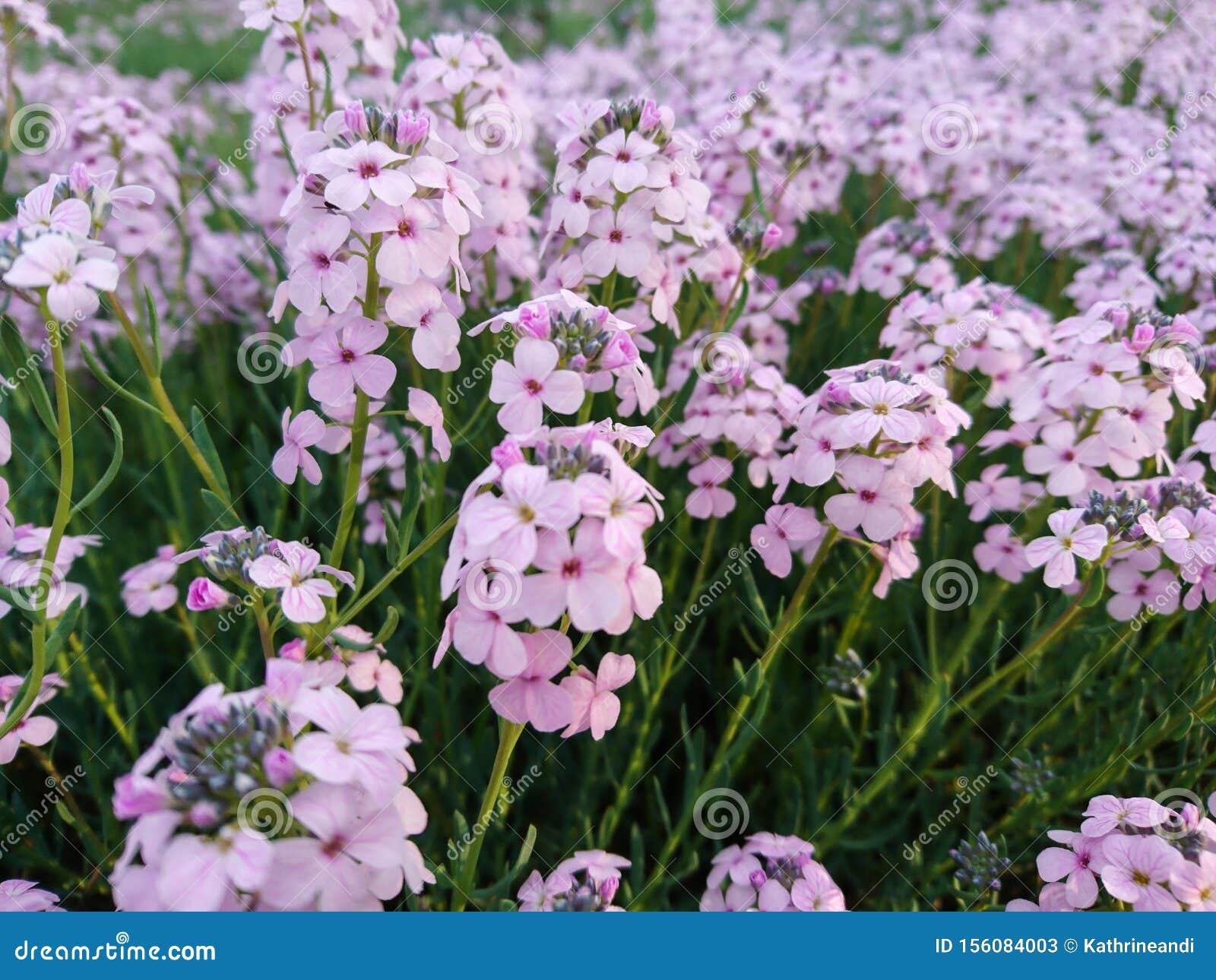Lots of pink purple flowers macro nice nature background
