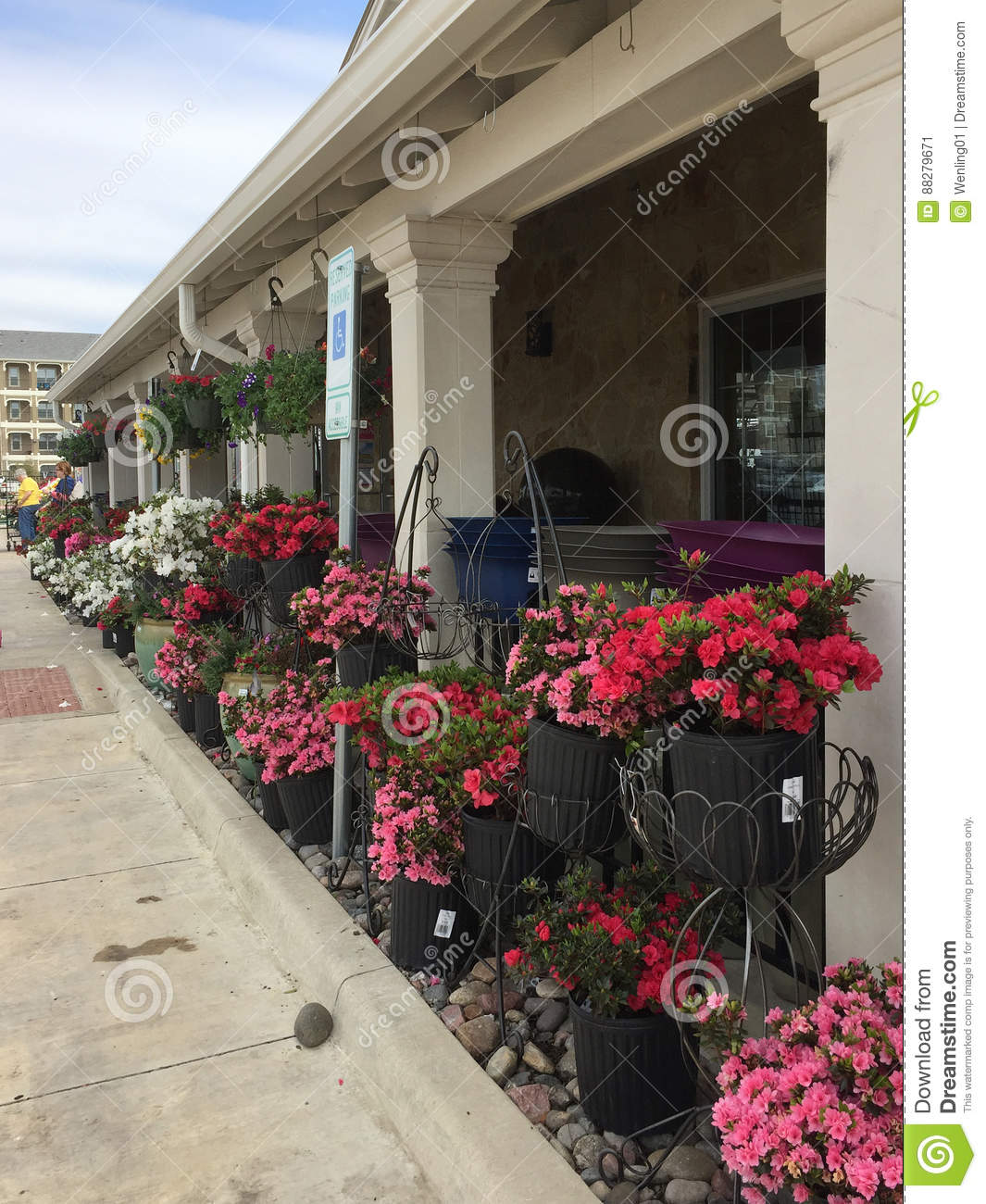 Lots Of Spring Flowers For Sale Editorial Photo Image Of Shelves