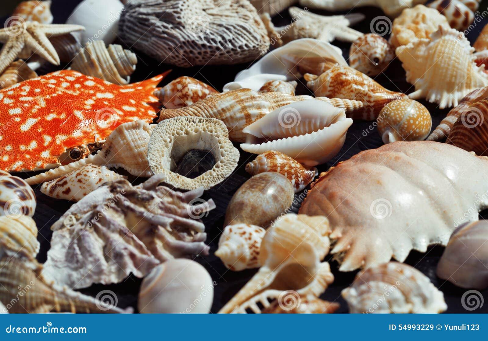 Lott av snäckskal på setout samman med krabban