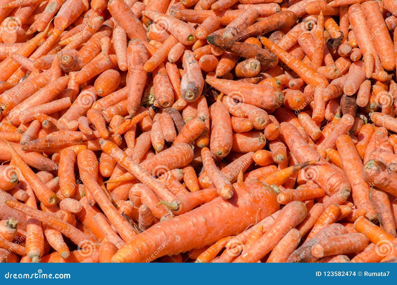 Lotto delle carote per l alimentazione dei cavalli