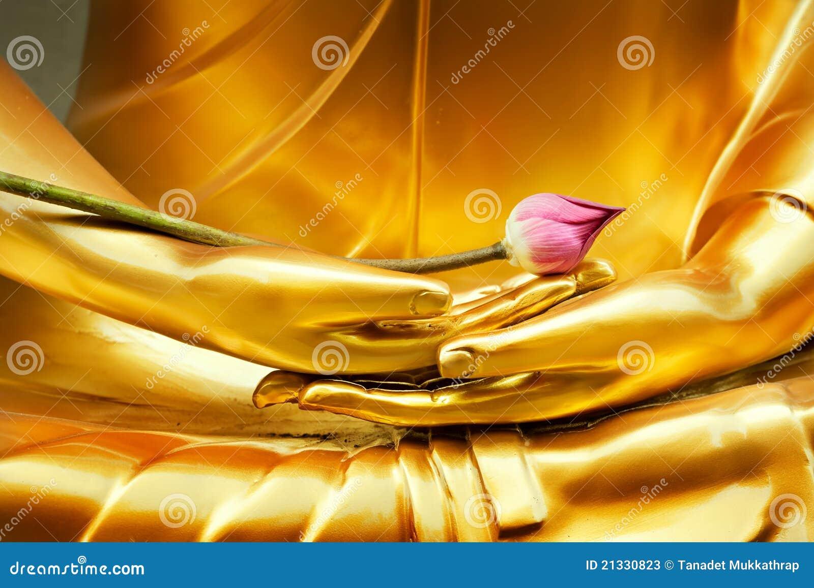 Lotus à disposition de Bouddha