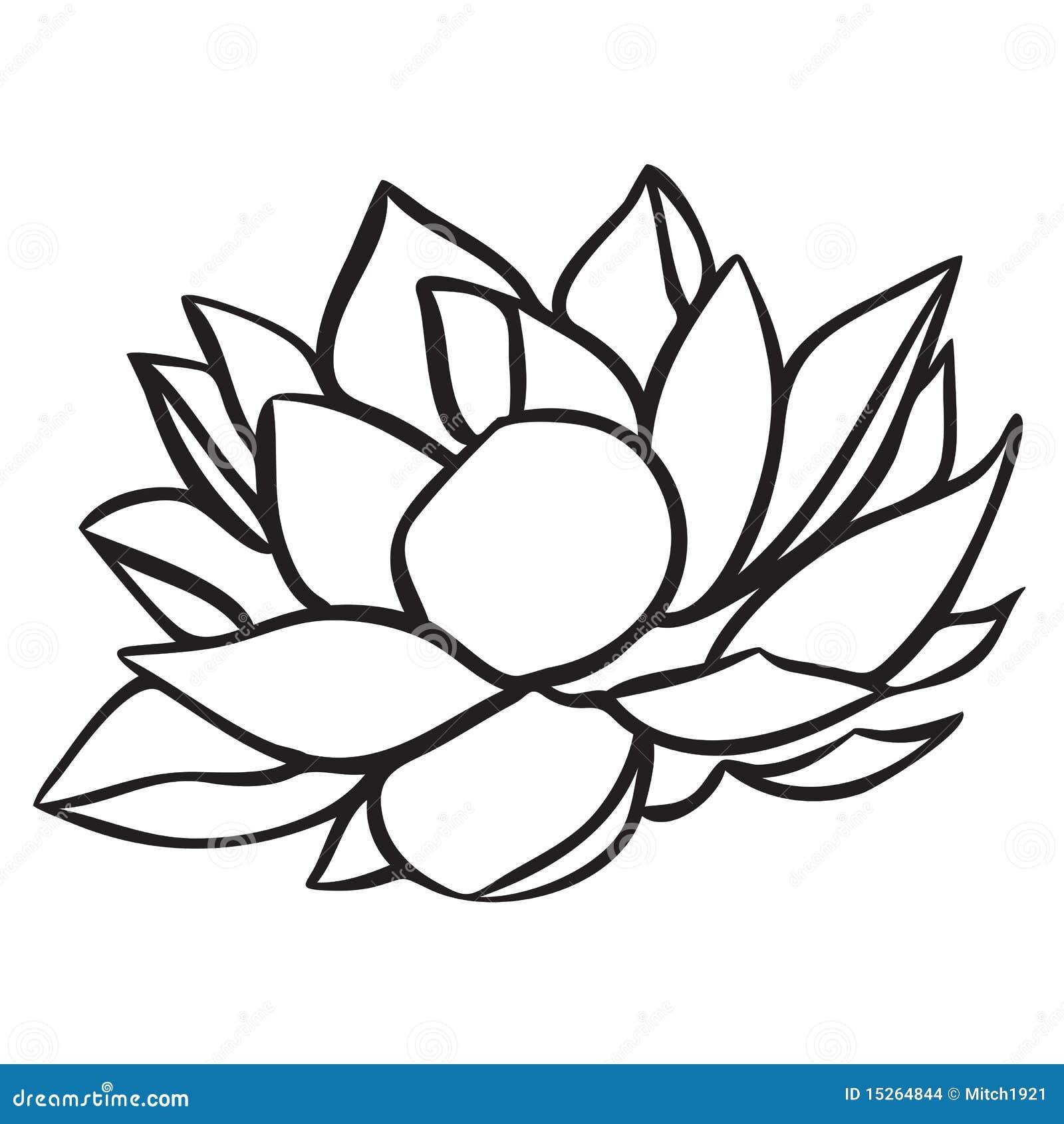 lotus vector illustratie  illustratie bestaande uit