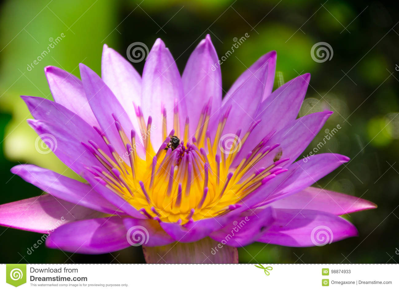 The Lotus Is Also A Representative Of The Religion And The