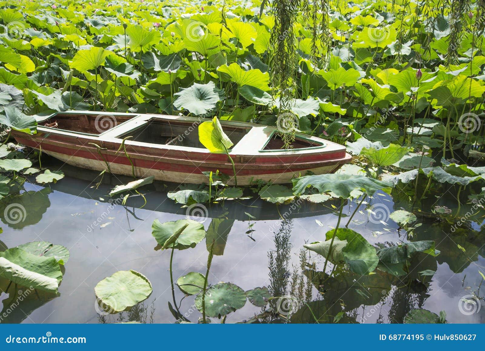 Lotus avec le bateau de longue queue