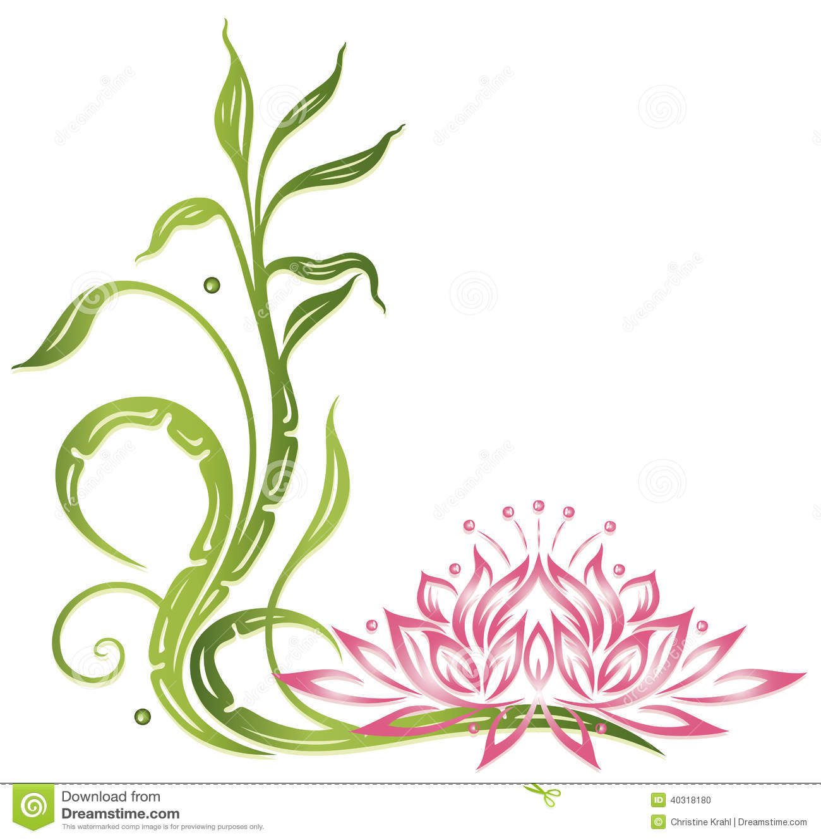 Lotus Bamboo Stock Photo Image Of Leaves Border Garden