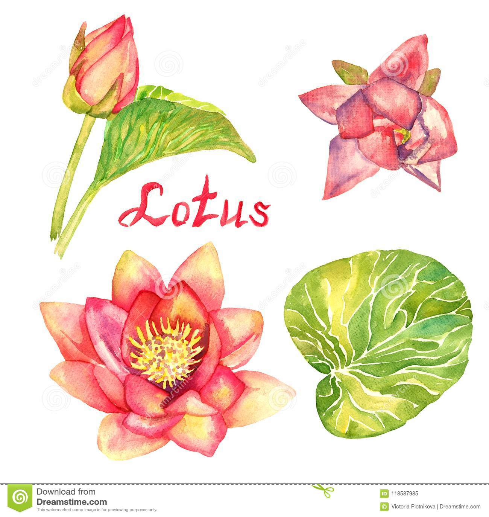 Lotus-Blumen-, Knospen- und Blattsammlung, lokalisiert auf Weiß