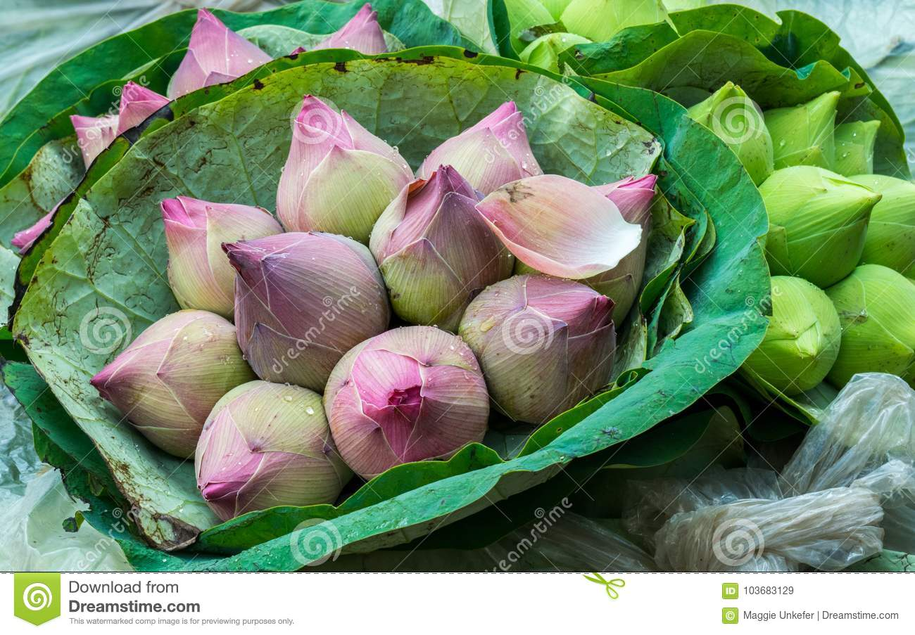 Lotus Bouquets In Bangkok Flower Market Stock Image Image Of
