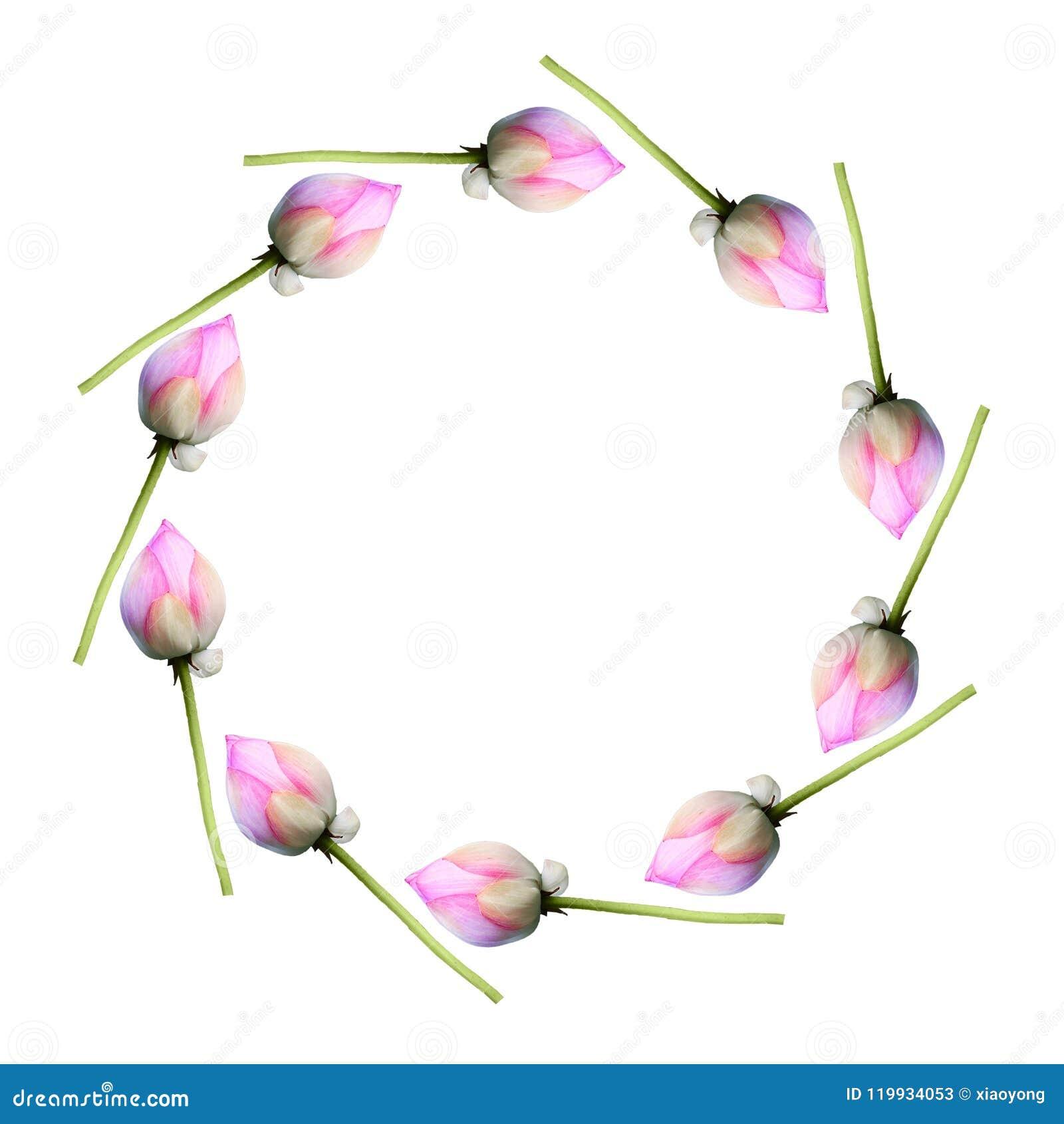 Lotus in circle pattern
