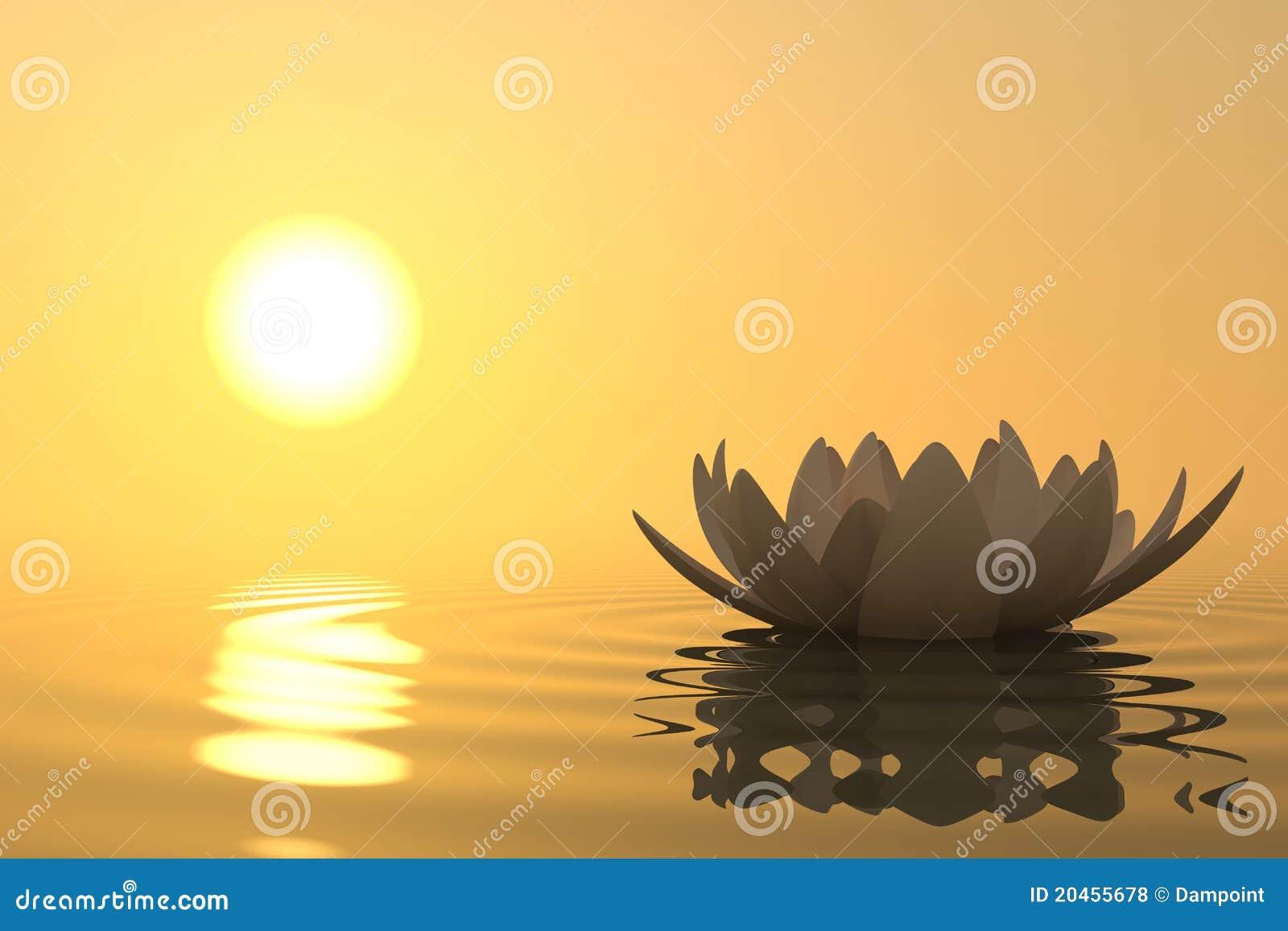 Lotus de fleur de zen sur le coucher du soleil photos - Soleil zen montpellier ...