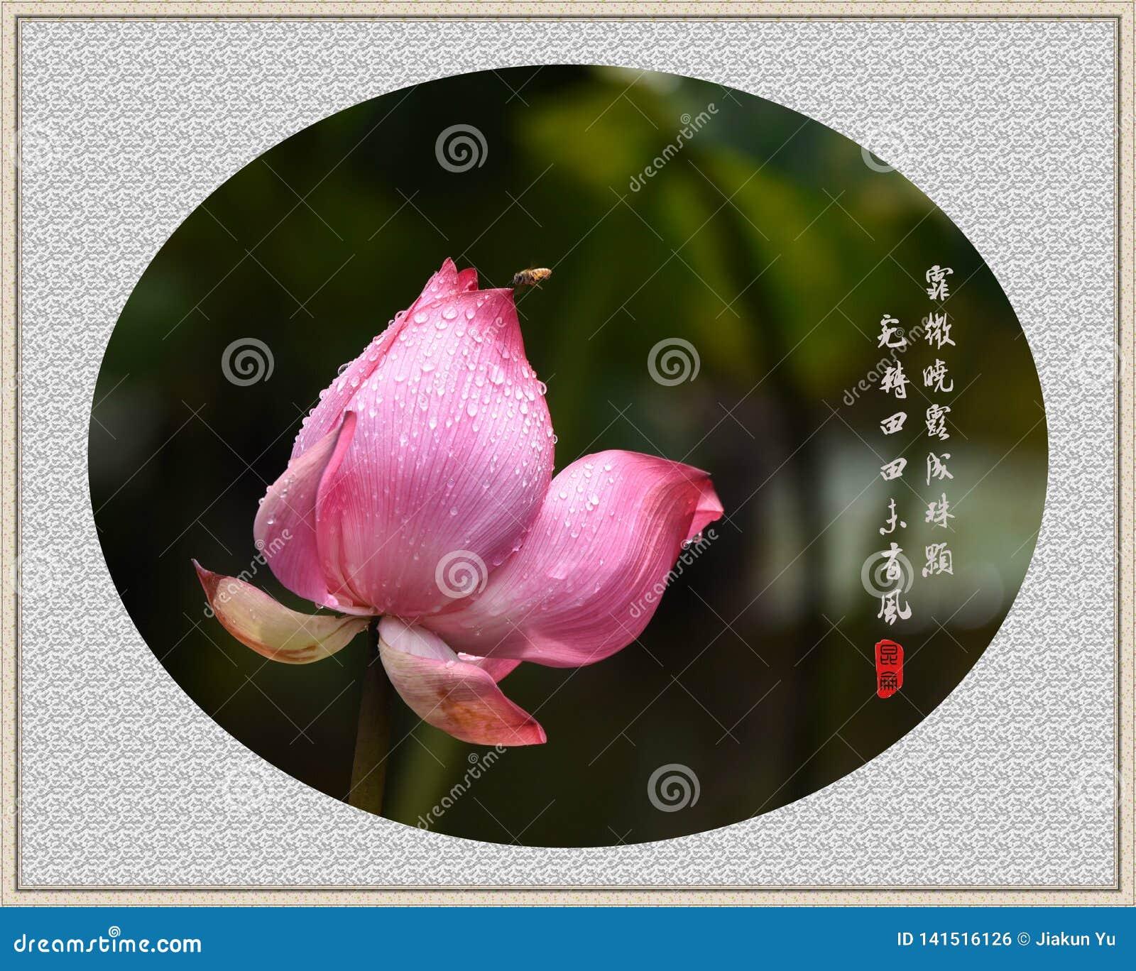 Lotus et abeille avec la poésie chinoise classique, style de peinture de chinois traditionnel