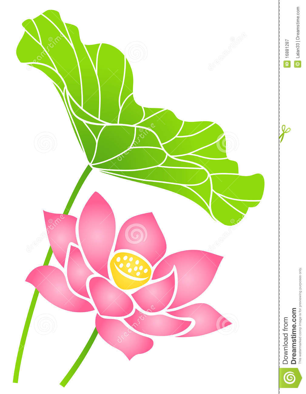 Lotus Flower Stock Vector Illustration Of Aquatic Leaf 16881287