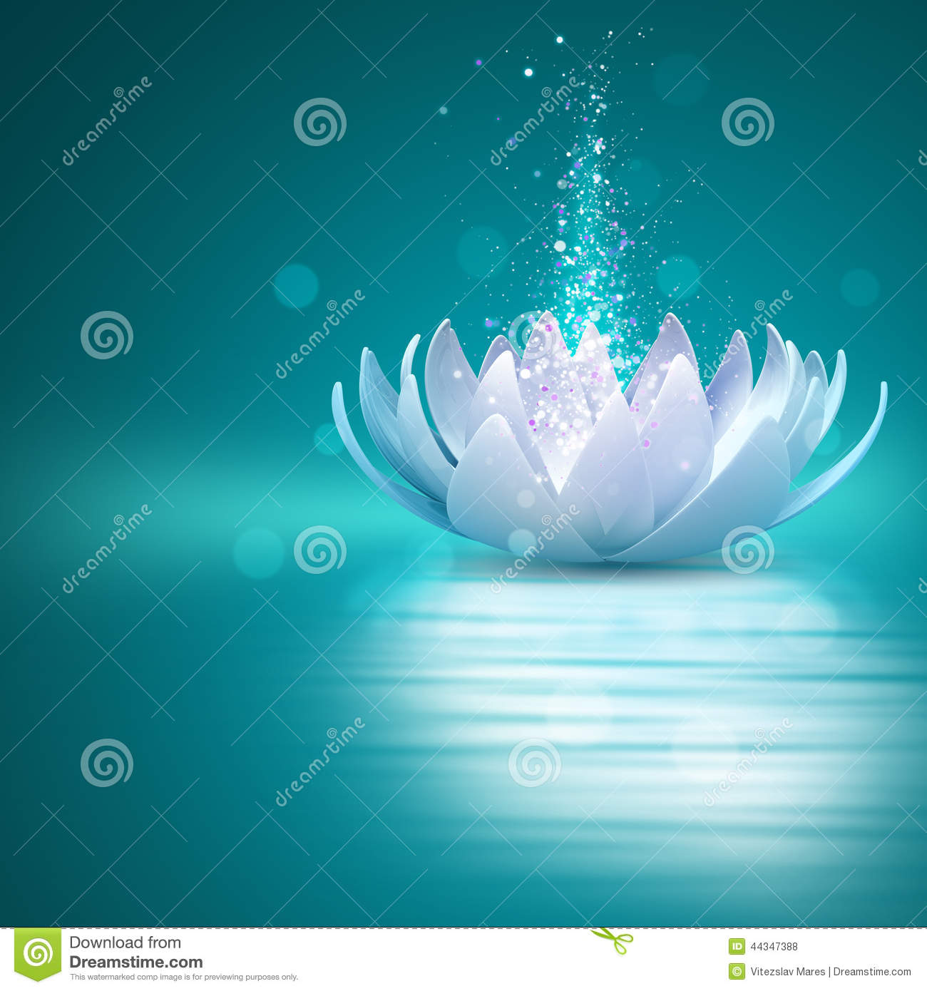 Lotus Flower Stock Photo - Image  44347388