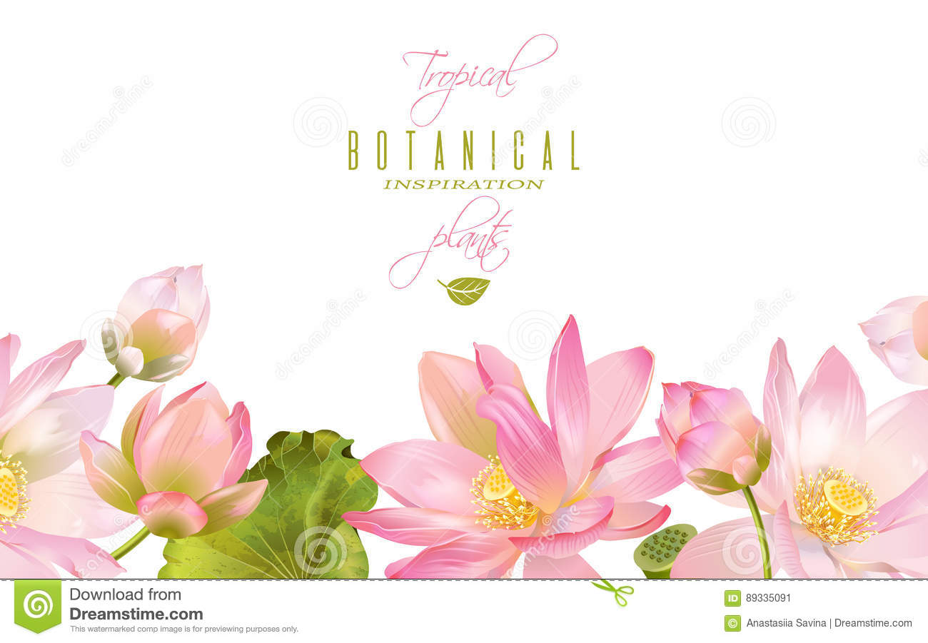 Lotus Flower Banner Stock Vector Illustration Of Lotus 89335091