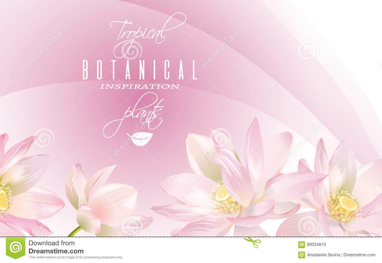 Lotus Flower Banner Stock Vector Illustration Of Flower 89334810