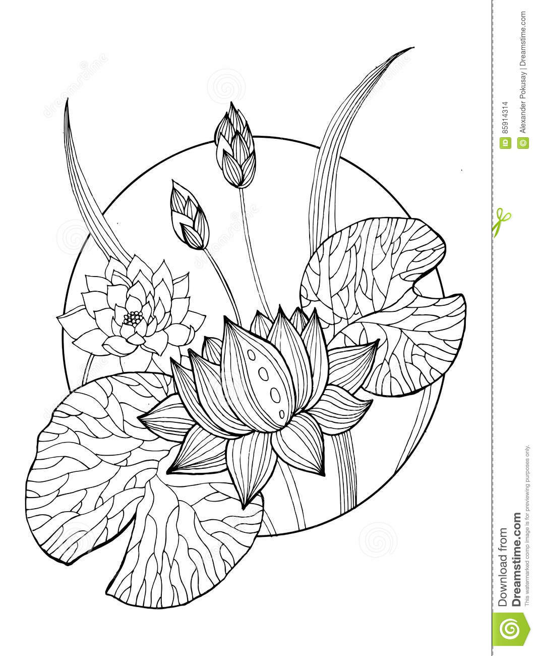 Lotus Flower Coloring Book Vector Illustration Stock Vector