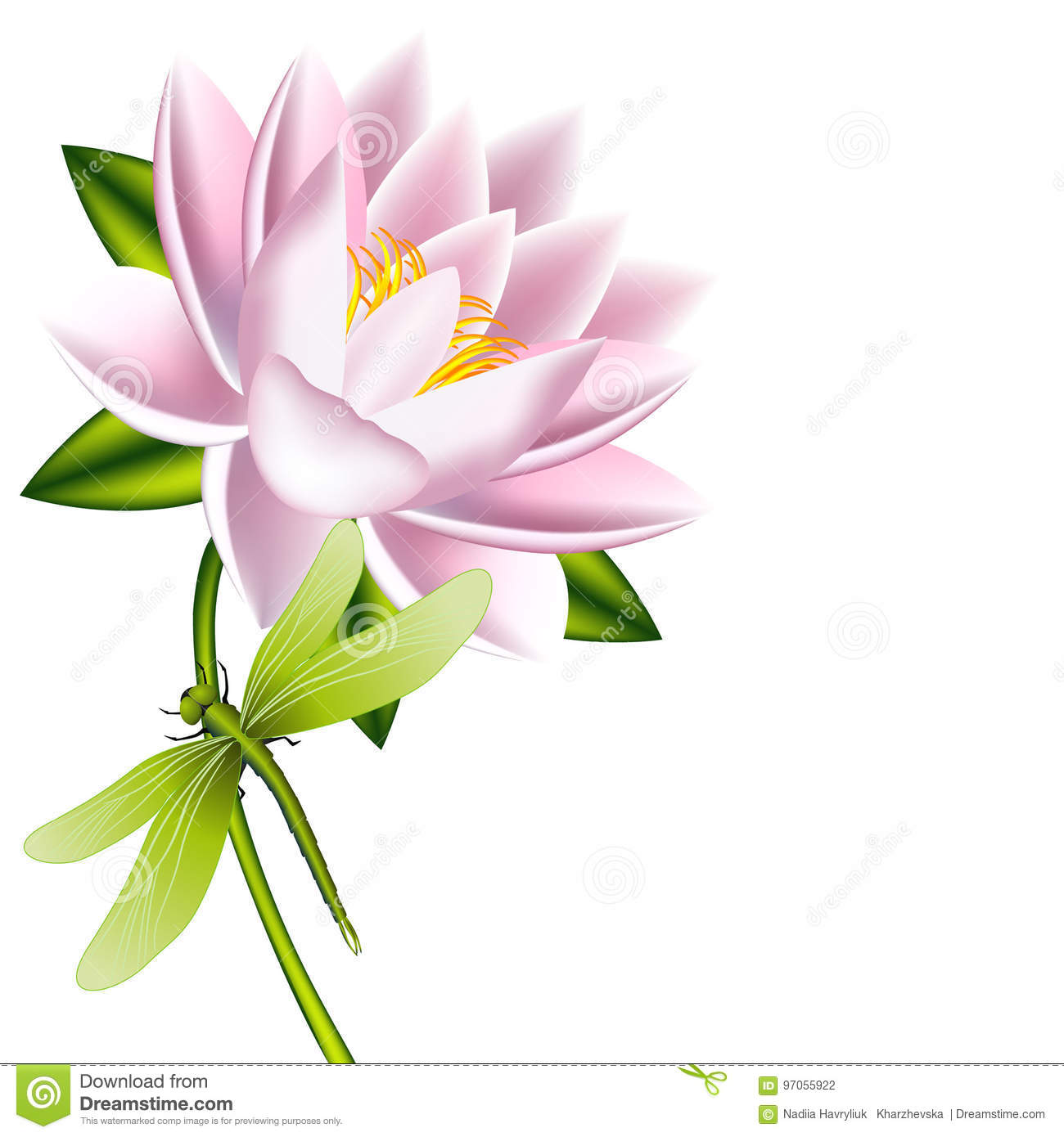 A Lotus Flower With Dragonfly On A White Background Stock Vector