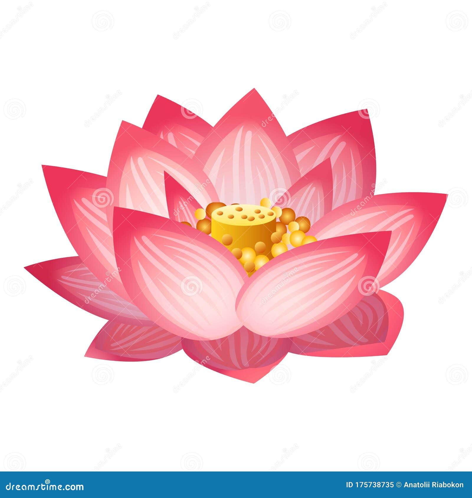 Cartoon Lotus Flower Stock Illustrations 3 879 Cartoon Lotus Flower Stock Illustrations Vectors Clipart Dreamstime