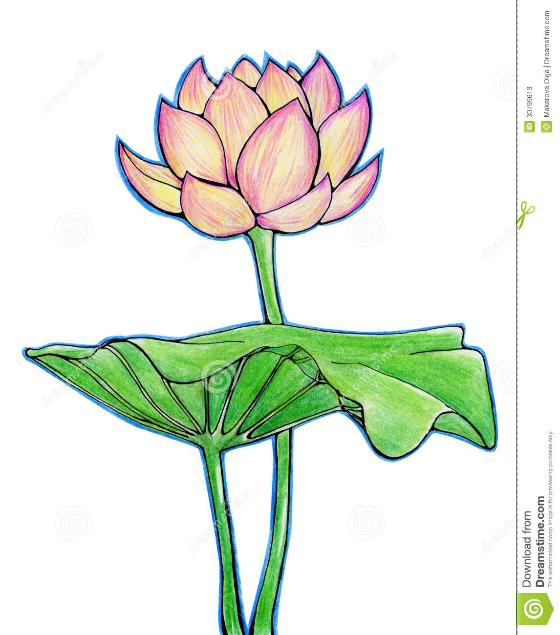 Lotus Flower And Leaf Stock Illustration Illustration Of Green