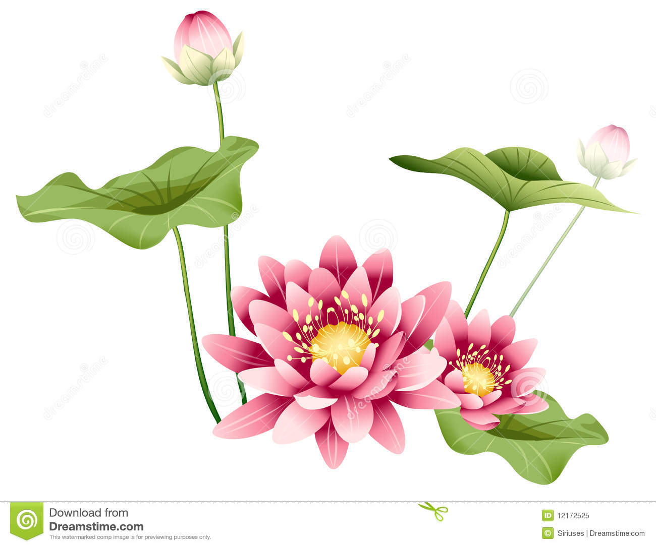 Lotus Flower And Leaves Stock Illustration Illustration Of Green
