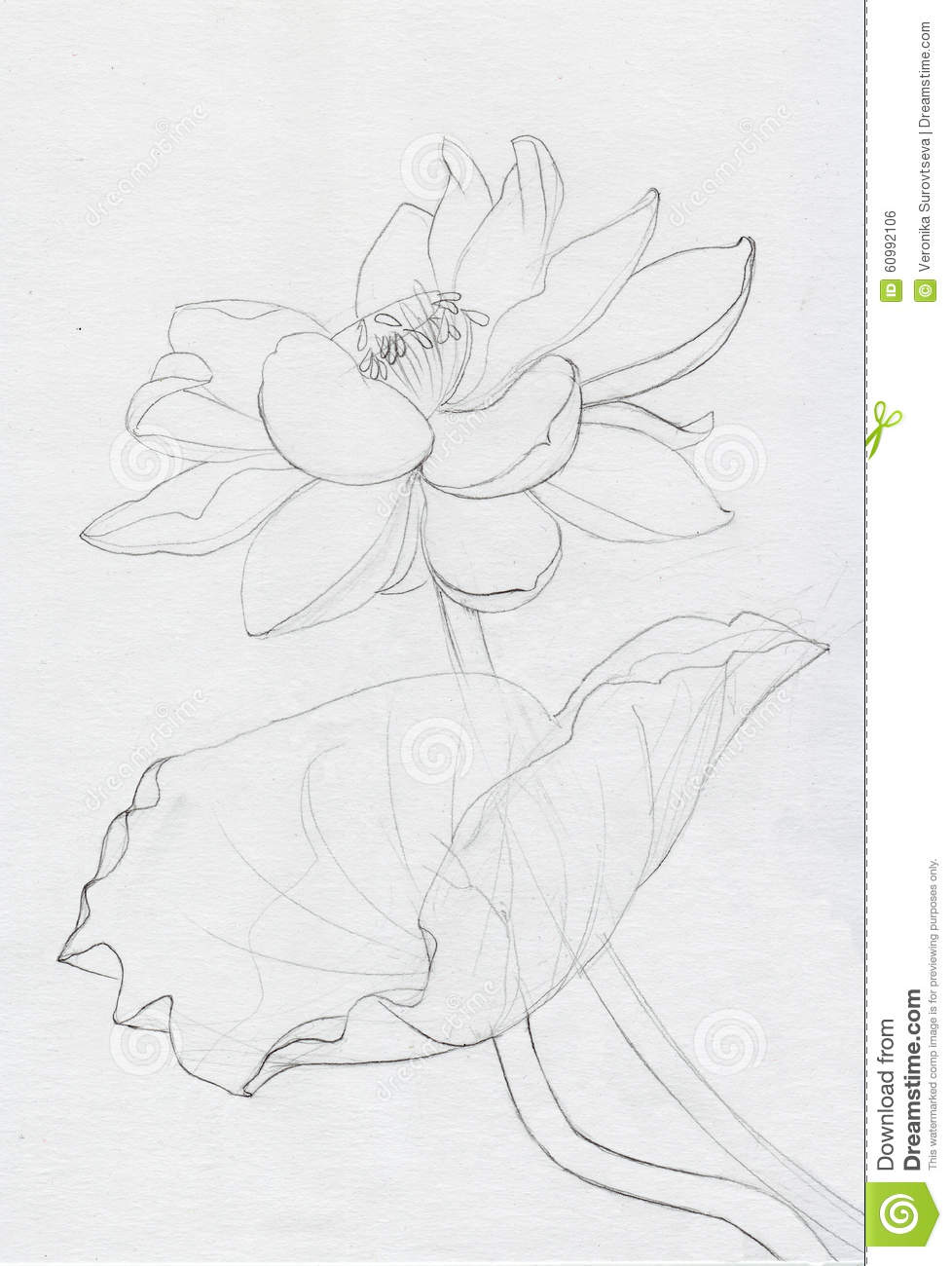 Lotus Flower Line Art Stock Illustration Illustration Of Lotus