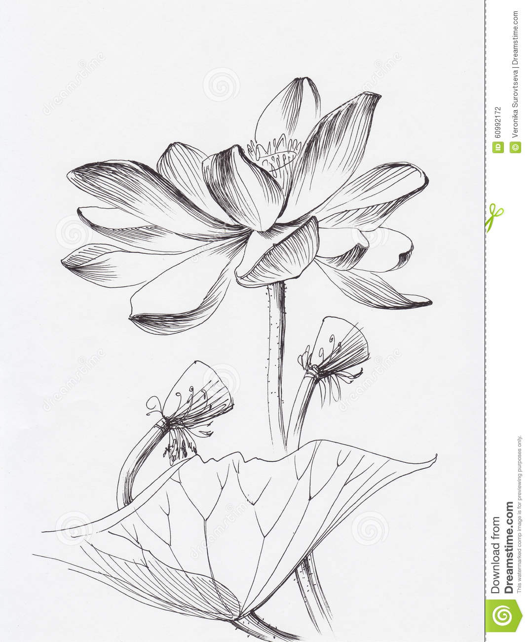 Lotus Flower Line Art Stock Illustration Illustration Of Chinese