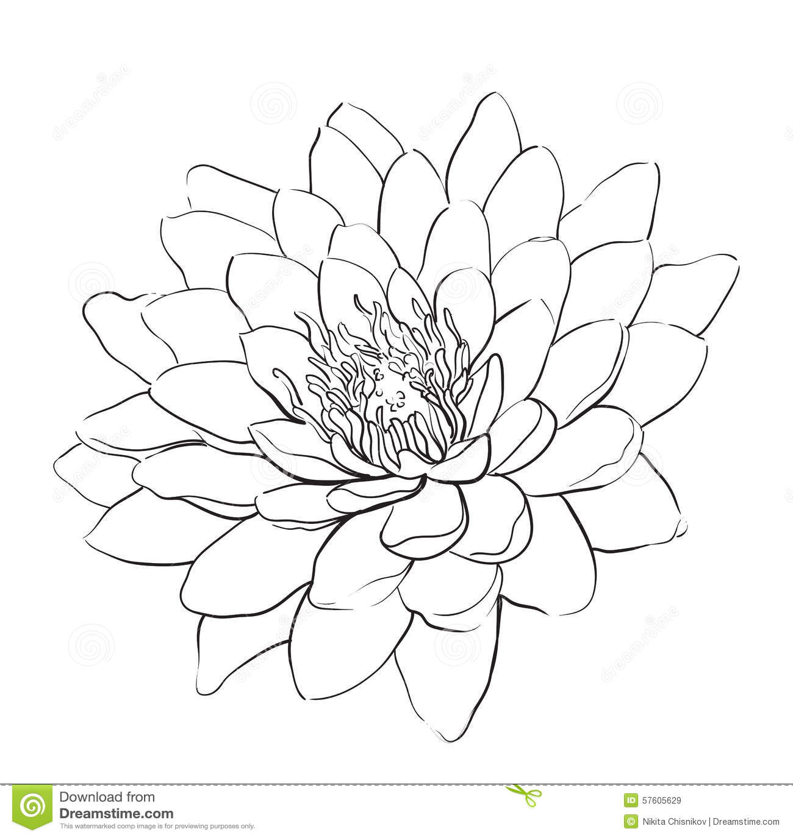 Lotus Flower Stock Vector Illustration Of Style Fabric 57605629