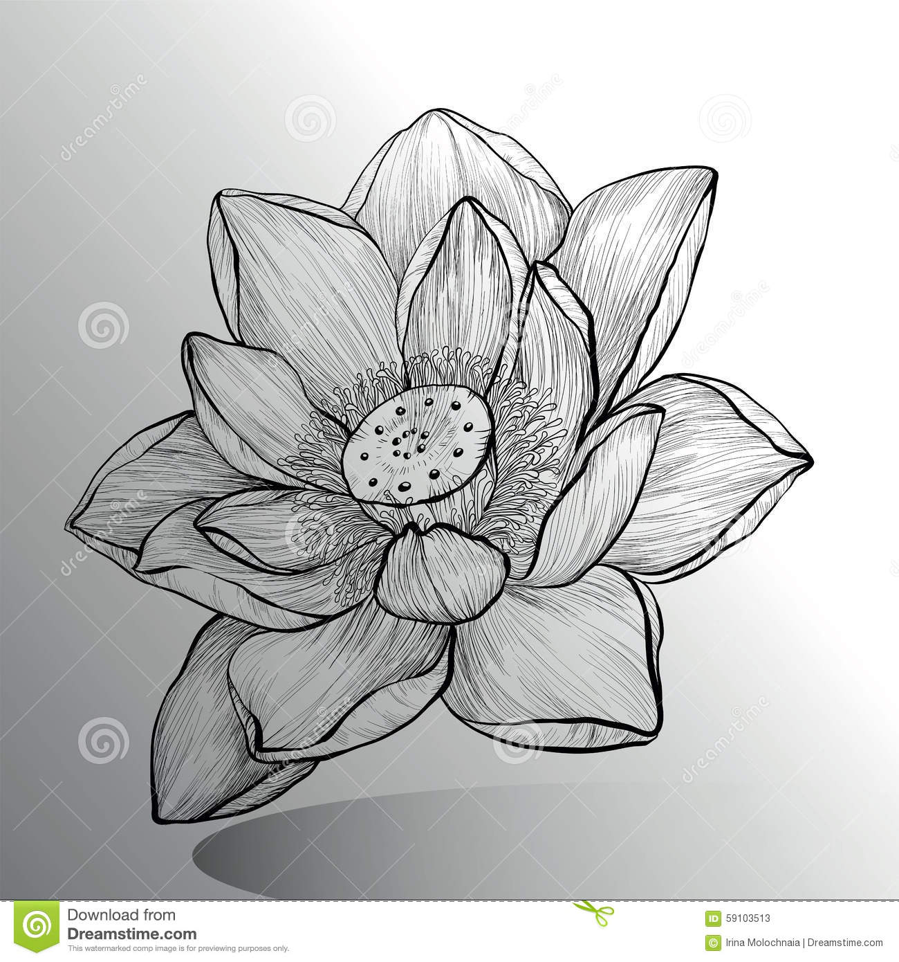 Lotus flower sketch stock vector illustration of leaf 59103513 lotus flower sketch mightylinksfo