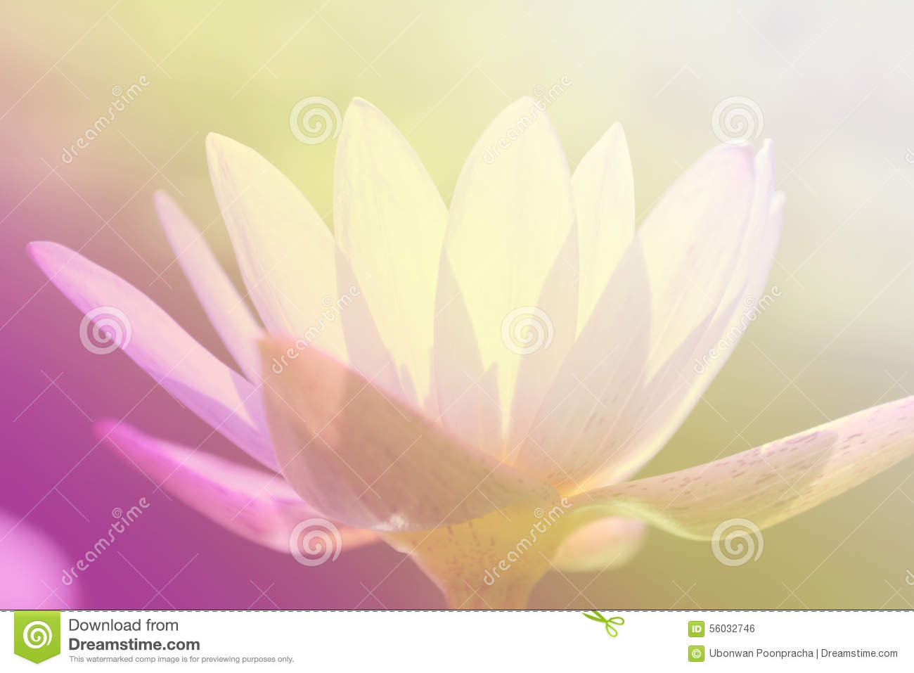 Old fashioned what colors do lotus flowers come in image coloring perfect what colors do lotus flowers come in festooning coloring izmirmasajfo