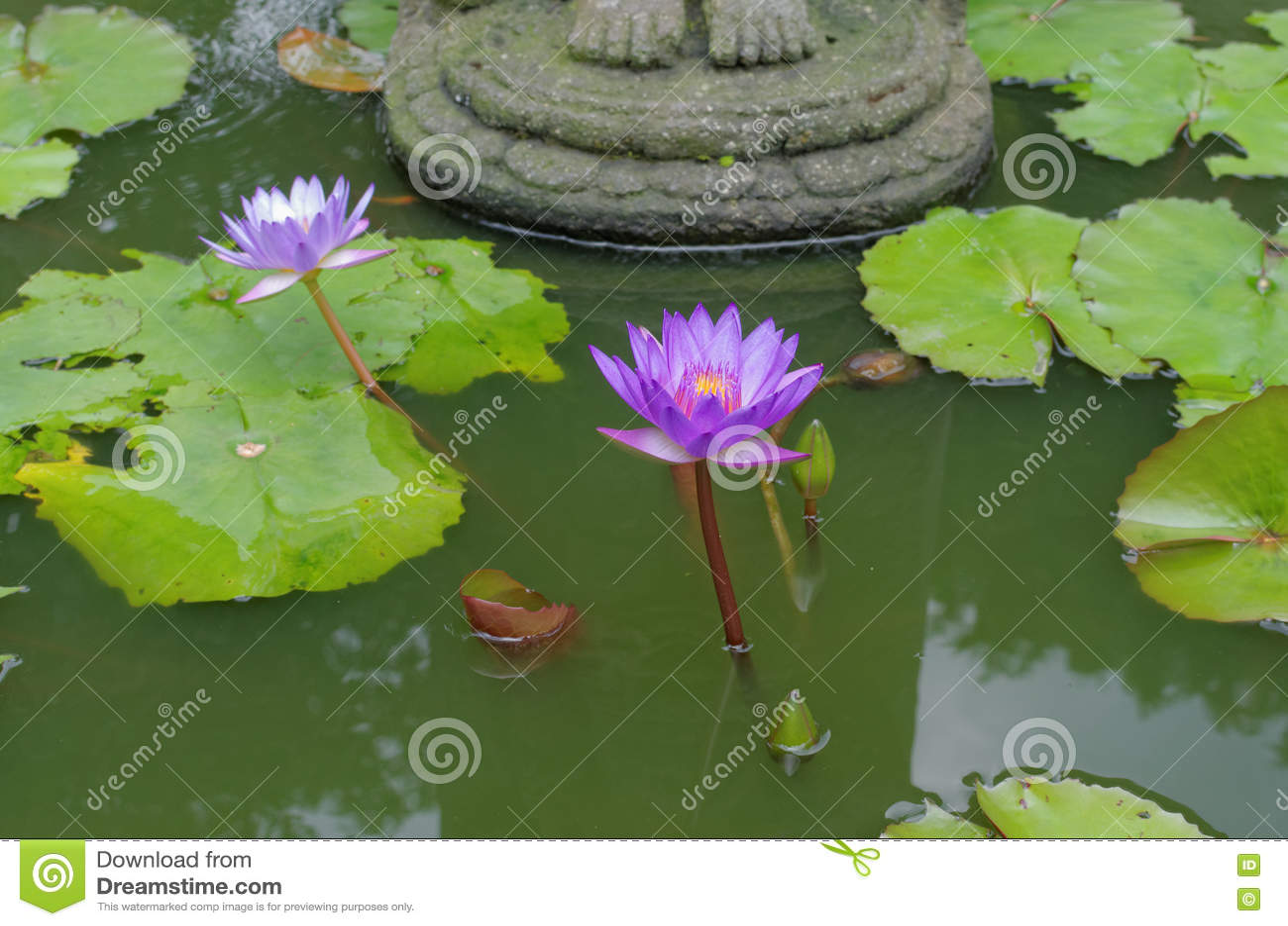 Lotus Flower Under Buddhas Feet Stock Photo Image Of Buddhism