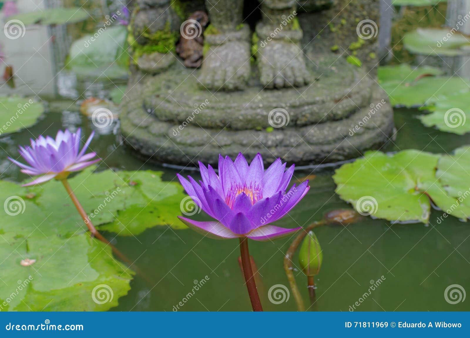 Lotus Flower Under Buddhas Feet Stock Image Image Of Detail